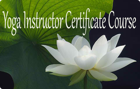 Yoga Instructor Certificate Course